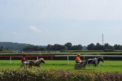 Green Turf - pony racing